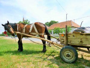 ROMANIA: Vehicles of the Banat