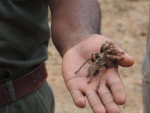 SOUTH AFRICA: The Wisdom-Poop-Walk through Balule