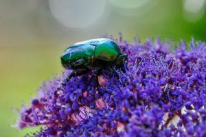 GERMANY: BUGA Areal Heilbronn – Nature Makro Close Ups